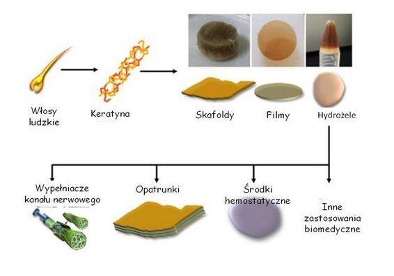 Zastosowanie biomateriałów na bazie keratyny wyizolowanej z włosów ludzkich