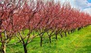 Członkowie Parlamentu Europejskiego wspierają folie biodegradowalne w rolnictwie