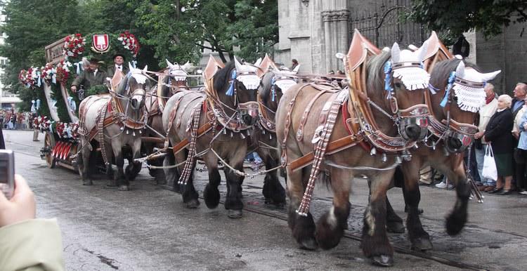 Konie na Oktoberfest