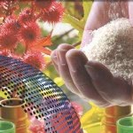 Diversity of the Bioeconomy: 11th Conference on Bio-based Materials