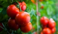Innowacyjne rozwiązanie Ampacet w foliach dla rolnictwa