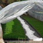 Biopolimery i tworzywa ulegające biodegradacji: biotworzywa