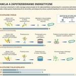 Oksy i biodegradowalne termoplasty
