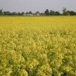 Oksy-biodegradacja: sprawdzona technologia