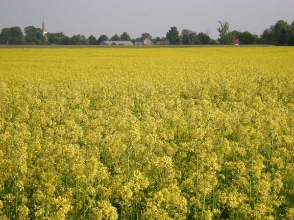Polscy naukowcy potwierdzili działanie oksy-biodegradacji.