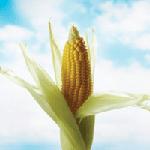 Bioplastics market is still growing