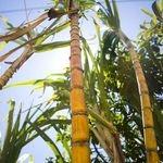Dow Chemical i Mitsui inwestują na rynku biopolimerów