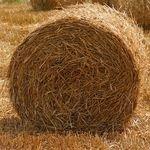 Można przerabiać biomasę na tworzywa