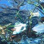 Odpady tworzyw sztucznych niszczą morskie życie