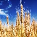 Nowe biotworzywo dla opakowalnictwa