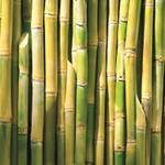 Bioplastiki do produkcji opakowań kartonowych