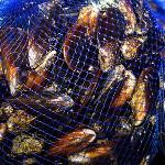 Sieci z dodatkiem Biomaster eliminują choroby ryb