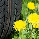 Russian Dandelions as a source of natural rubber for Sumitomo